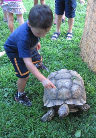 Boy Pets Tortoise