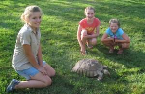 1Girls w Turtle